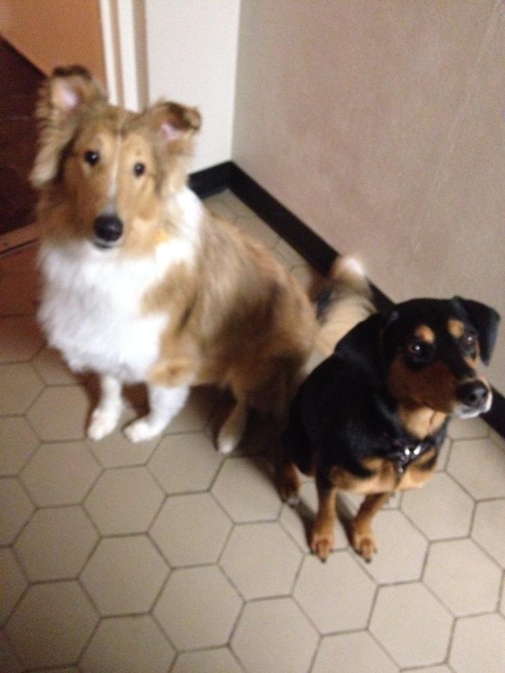 Chloe Bear & Leo Lover
