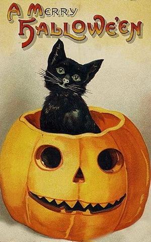 vintage-halloween-black-cat-pumpkin-card